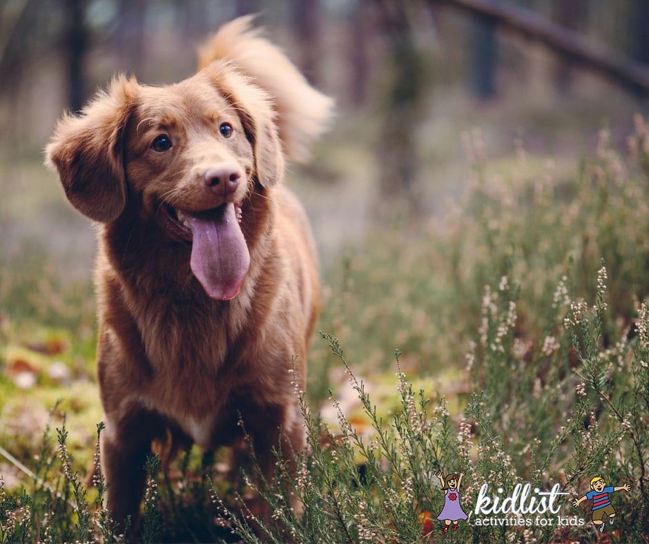 Happy dog running through tall grass